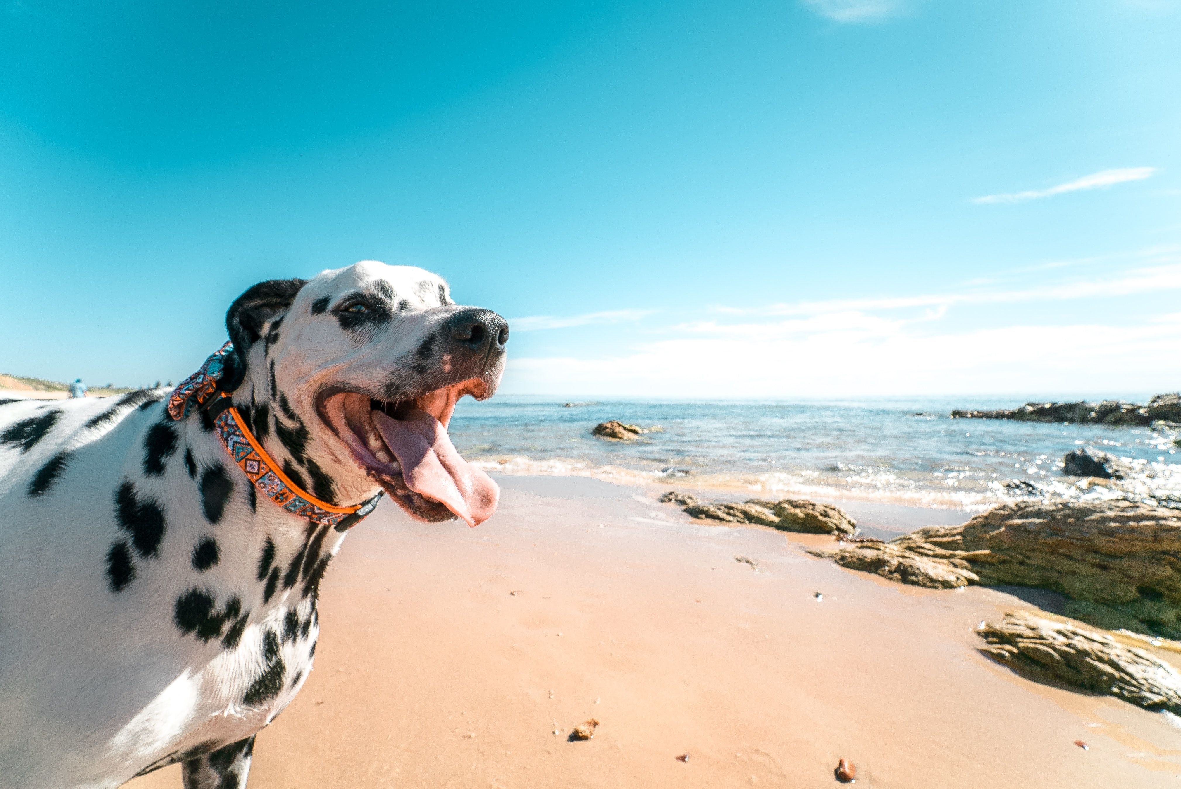How to know that your pet is happy?-3