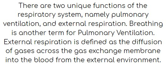 There are two unique functions of the respiratory system, namely pulmonary ventilation, and external respiration. Breathing is another term for Pulmonary Ventilation. External respiration is defined as the diffusion of gases across the gas exchange membrane into the blood from the external environment.